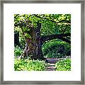 Birnam Wood Scotland Framed Print