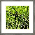 Black And White Winged Dragonfly Framed Print