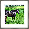 Black Stallion In Pasture Framed Print