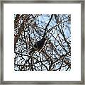 Black  Starling Framed Print