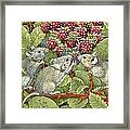 Blackberrying Framed Print