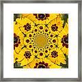 Blackeyed Susan Kaleidoscope Framed Print