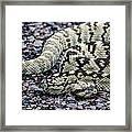 Blacktailed Rattlesnake Framed Print