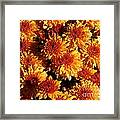 Blaze Of Flowers Framed Print