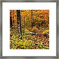 Blazing Forest Framed Print
