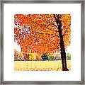 Blazing Tree Framed Print