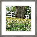 Bloom Gathering Framed Print by Beverly Hammond