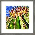 Blooming Barrel Cactus By Diana Sainz Framed Print