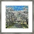 Blooming Cherry Tree Avenue Framed Print