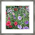 Blooming Extravaganza Framed Print
