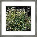 Blooming Rudbeckia Bush Framed Print