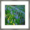 Blue And Yellow Hillside Framed Print