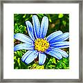 Blue Aster In Park Sierra Near Coarsegold-california   Framed Print