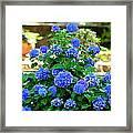Blue At Bonaventure Framed Print