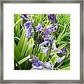Blue Bell Framed Print