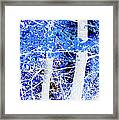 Blue Birch Trees Framed Print