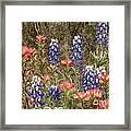 Blue Bonnet Carpet V10 Framed Print