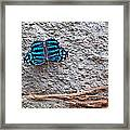 Blue Butterfly Myscelia Ethusa Art Prints Framed Print