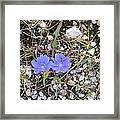 Blue Daisy Framed Print