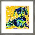 Blue Doxie Framed Print