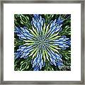 Blue Flower Star Framed Print by Annette Allman