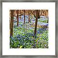 Blue Flowers In Spring Forest Framed Print