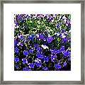 Blue Flowers On Sun Framed Print