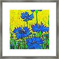 Blue Flowers - Wild Cornflowers In Sunlight  Framed Print