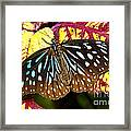 Blue Glassy Tiger Butterfly Framed Print