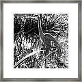 Blue Heron 7bw Framed Print