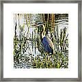 Blue Heron Backside Framed Print