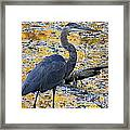 Blue Heron Naturally Framed Print