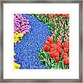 Blue Path Of Flowers Framed Print