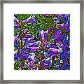 Blue Penstemon On Bald Mountain In Ketchum-idaho Framed Print