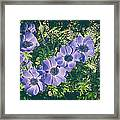Blue Poppies Blooms Framed Print