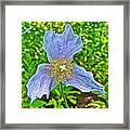 Blue Poppy In Les Jardins De Metis Or Reford Gardens Near Grand-metis-quebec Framed Print
