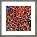 Blue Ridge Mountains Fall Foliage Framed Print