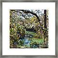 Blue Springs 1 Framed Print