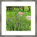 Blue Vervain And Rocks In Pipestone National Monument-minnesota  Framed Print