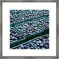 Blueberry Season In Maine Framed Print