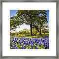 Bluebonnet Meadow Framed Print