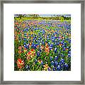 Bluebonnets And Prarie Fire Framed Print