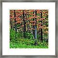 Blustery October Weather Framed Print