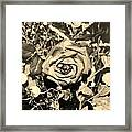 Boca Rose Framed Print