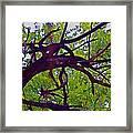 Bois D'arc Framed Print