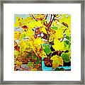 Bonsai Tree With Yellow Leaves Framed Print