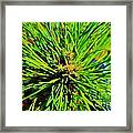 Bonzi Pine Framed Print