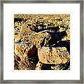 Bookcliffs 138 Framed Print