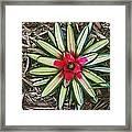 Botanical Flower Framed Print
