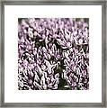 Botanical Stars Framed Print